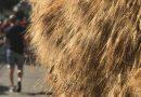 Foglianise, la sfilata dei Carri in onore di San Rocco